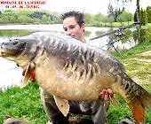 Fully-scaled carp - 47.4 Lbs